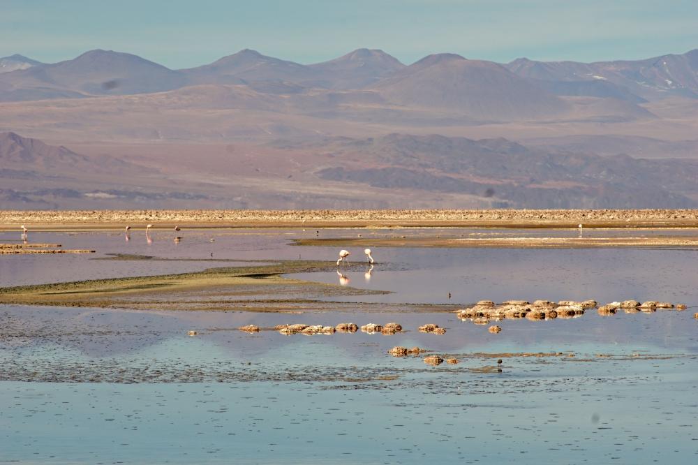 Riserva nazionale los flamencos-fenicotteri-San Pedro de Atacama-Cile-America latina-viaggio di nozze