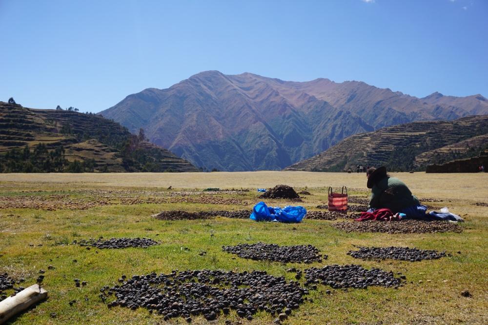 Patate-Chinchero-Gastronomia peruviana-Valle Sacra-Perù-Sud America-Ande