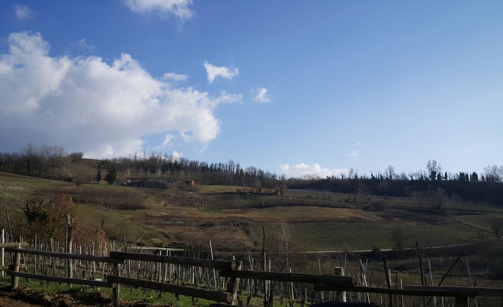 Langhe-Natura-Vigneti-Vino-Paesaggio
