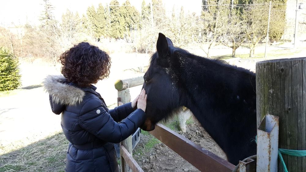 Langhe-Natura-Cavallo