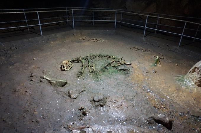 Natura-Grotta-Pestera Ursilor-Montagna-Chiscau-Romania-Oradea-Viaggio-Viaggiare-Visitare la Romania